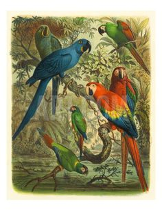 Tropical Birds III Premium Giclee Print by Cassel at Art.com