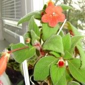 4940_1283028391 - profilový obrázok Plants, Garden, Garten, Planters, Gardening, Outdoor, Home Landscaping, Plant, Tuin