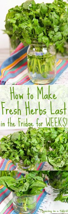 The best way to store fresh herbs in the refrigerator!  Simple tips and ideas on how to store fresh herbs to make them last for weeks!  Great for most healthy fresh herbs including parsley, cilantro and basil.  Preserves them for up to a month using plastic bags in a jar./ Running in a Skirt