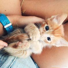 Follow @ourfriends4ever for more cute cat pics! #cat #cats #catsofinstagram #catlife #catlover #pet #pets #ilovemycat #meow #kittycat #petsofinstagram #animal #animals #ourfriends4ever #catlanguagebible #catstagram #instacat #kitty #kitten #catoftheday #kittens #catlovers #cats_of_instagram #gato #lovecats #neko