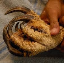 eagle claws - Google Search The Scottish Play, Harpy Eagle, Eagle Claw, Claws, Raptors, Owls, Birds, Google Search, Image