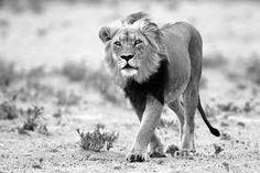 Afbeeldingsresultaat voor black and white animals