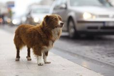 Implement an emergency system for animals living in the street