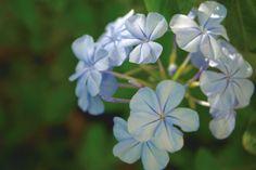 Blue white round petal flower bunch by Shreeharsh Ambli on 500px