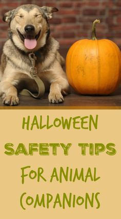 Small Animal On Pinterest Pets Pet Safe And Safety Tips