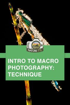 Introduction to Macro Photography: Technique - In this nature photography tutorial learn the technique to taking great macro photos of insects, flowers and more! Expert Ross Hoddinott shares his top tips on depth of field and lighting in this guide. Wildlife Photography Tips, Gopro Photography, Landscape Photography Tips, Photography Basics, Photography Tips For Beginners, Types Of Photography, Photography Lessons, Photography Tutorials, Nature Photography