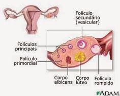 Blog Da Fertilidade à Maternidade!!!