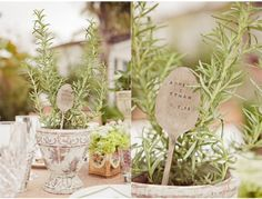 Party favor - rosemary pot with wedding date