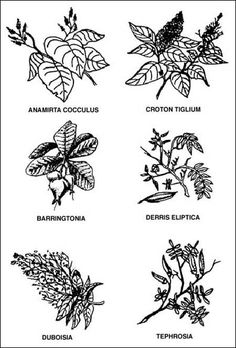6 plants that when mashed up and put in water stuns fish so they float to the top of the water briefly.