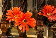 www.facebook.com/fotosjimenadelmarmol
