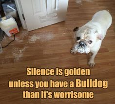 Silence from a Bulldog IS worrisome!