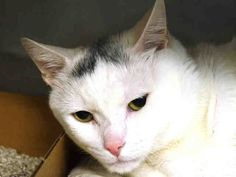 A1034073 - OVEN 15 *** TO BE DESTROYED 04/28/15 **** To rescue a Death Row Cat, Please read this:http://information.urgentpodr.org/adoption-info-and-list-of-rescues/  To view the full album, please click here: http://nyccats.urgentpodr.org/tbd-cats-page/
