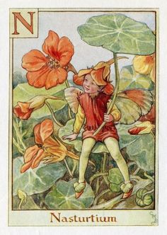 Nasturtium alfabet Letter N Flower Fairy Vintage Print, c.1940 Cicely Mary Barker-boekillustratie plaat