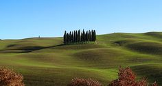 One of the most beautiful Tuscan icon: lonely cypress beside the legendary road Cassia