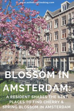 Amsterdam Travel: Where to Find Cherry Blossom in Amsterdam : As the Bird flies... Travel, Writing, and Other Journeys Cherry Blossom Season, Cherry Blossom Tree, Blossom Trees, Amsterdam Travel Guide, Visit Amsterdam, Start Of Winter, Magnolia Trees, Spring Blossom