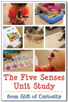 The Five Senses unit study with lots of activities and links to free printables for teaching kids about the five basic senses of sight, smell, touch, taste, and hearing #fivesenses #preschool #kindergarten #giftofcuriosity    Gift of Curiosity Five Senses Preschool, My Five Senses, Senses Activities, Science Activities For Kids, Kindergarten Science, Preschool Lessons, Preschool Plans, Tot School, Early Childhood