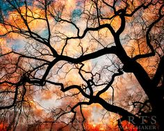 Tree Photography Elm Tree Winter Tree Silhouette At Sunset Nature Photography Orange Black Wall Art Bare Tree Art Print Old Tree Tree Photography, Sunset Nature, Black Wall Art, Silhouette Photography, Winter Trees, Tree Art, Tree Painting, Silhouette Art, Tree Tattoo Drawings