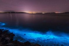 Sea Sparkle - Extreme Bioluminescence in Tasmanian Waters Light Painting Photography, Photography Photos, Wildlife Photography, Bioluminescent Plankton, Beautiful World, Beautiful Places, Malaysia Resorts, Beach Lighting, Looking Out The Window