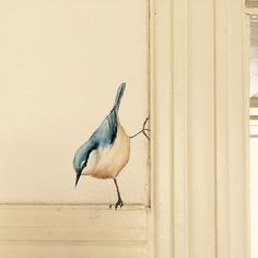 Bird - Home decoration - shabby chic Hand Painted Walls, Painted Wall Murals, Wall Decor, Wall Art, Bedroom Decor, Bird Art, Painted Furniture, Diy Home Decor, Street Art