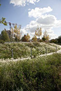 Martin Luther King Park by Atelier Jacqueline Osty & associes « Landscape Architecture Platform Landscaping Near Me, Landscaping Plants, Outdoor Landscaping, Contemporary Landscape, Urban Landscape, Landscape Plans, Martin Luther King, Prairie Meadows, Wetland Park