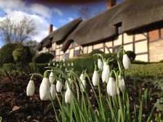 Go and see the snow drops in Anne Hathaway's garden and teach the kids about Shakespeare whilst you're there!