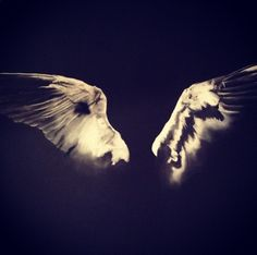 Hand drawn in charcoal by Julia cooper for voila! Studio #talent #wings #shadows #worksonpaper #art #design #decor #wings #beinspired #blackandwhite #interiors #decor #series @juliacoopr #moretocome #custom