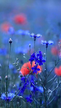 Beautiful Paintings Of Nature, Beautiful Dark Art, Nature Paintings, Beautiful Landscapes, Best Nature Wallpapers, Beautiful Flowers Wallpapers, Landscape Pictures, Landscape Art, Flowers Nature