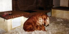Four Legged, Large Dogs, Dog Grooming, Fleas, Arthritis, How To Fall Asleep, Your Dog, Old Things, Toller Dog