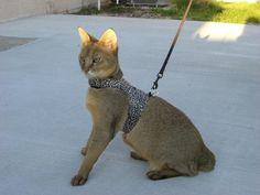 Cat Walking Jackets | Cat Harnesses | Joy Katz