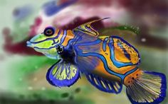 Top 10 Most Beautiful Fishes in The World 2017
