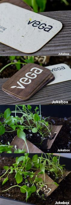 """Unique Seeded Business Cards Grow Real Plants - these are amazing, the seeds are actually embedded within the paper stock so all you need to do to """"grow"""" the card is to plant it in moist soil - clever!"""