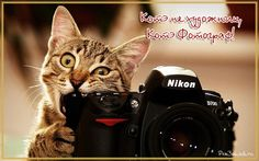 котэ фотограф