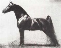 Legendary Curtis Frisco Pete - Six Times National Champion - 1954 to 1959 - owned by AC Buehler - Fernwood Farm, Barrington, IL