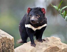 Die 281 besten Bilder von Tasmanien in 2020 | Tasmanien ...