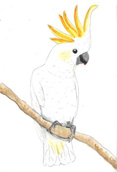 Cacatua Parrot hand drawn watercolor illustration by RobertaTomei on Etsy