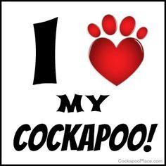 I <3 My Cockapoo!