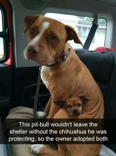 30 Adorable Doggo Snaps That'll Warm Your Cold Heart - Memebase - Funny Memes Funny Animal Memes, Cute Funny Animals, Funny Animal Pictures, Cute Baby Animals, Funny Cute, Cute Dogs, Funny Memes, Funniest Memes, Funny Dog Humor