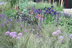 Cloudy Bay Sensations Garden Cloudy Bay, Planting Plan, Chelsea Flower Show, Grasses, Heaven On Earth, Garden Plants, Outdoor Spaces, Garden Ideas, Mountain