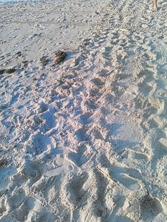 Turtle tracks oak island