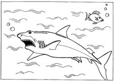 Sharks A Great White Shark Is Hunting On The Ocean Surface Coloring Page
