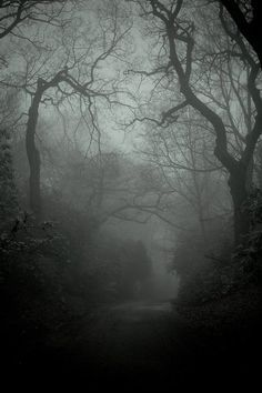 A dark and misty forest path