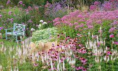 Garden Ideas, Border ideas, Perennial Planting, Perennial combination, Summer Borders, Fall Borders, Echinacea purpurea, Purple Coneflower, Sedum Autumn Joy, Eupatorium Maculatum, Geranium Rozanne