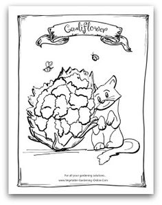 Free Printable Garden Cauliflower Coloring Activity Page For Kids