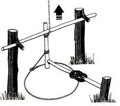 Taut rope from the tree is inclined to the end of the toggles, which held the crossbar. Lever with bait keeps the brakes in place.