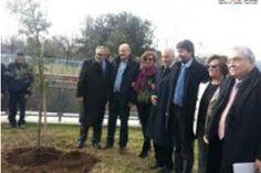 Un albero per commemorare Toscanini, coraggio e musica contro nazifascismo: a Parma