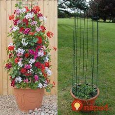 Krásne nápady, vďaka ktorým budú vaše kvety v záhrade žiariť. Či už ich pestujete v črepníkoch, alebo voľne v pôde, prinášame vám skvelé tipy, ako si ich krásu užiť ešte viac. Neváhajte a inšpirujte sa krásnymi nápadmi. Na mnohé z nich využijete veci, ktoré sa vám možno bez úžitku povaľujú v garáži alebo v pivnici!... Container Flowers, Container Plants, Container Gardening, Diy Garden, Garden Projects, Diy Projects, Garden Oasis, Garden Pool, Terrace Garden