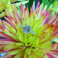 A pink and yellow chrysanthemum showcase this beautifully set Emerald cut diamond in a Pave-Set eternity band.