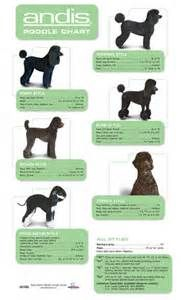 poodle guide