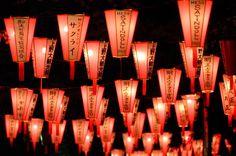 Paperlanterns in the dark --- at Not Kyoto, Tokyo Ueno spring festival