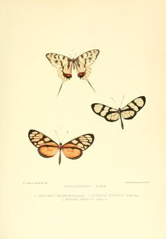 1850-52 - The genera of diurnal lepidoptera : comprising their generic characters, a notice of their habits and transformations, and a catalogue of the species of each genus by Doubleday, Edward, 1811-1849;